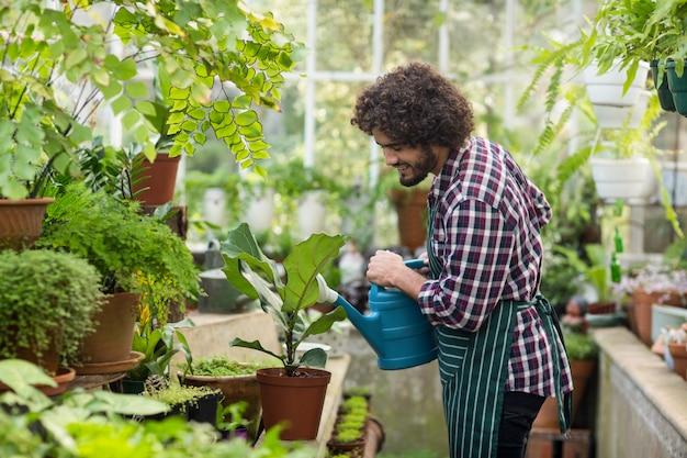 Мужской садовник поливает растения в теплице