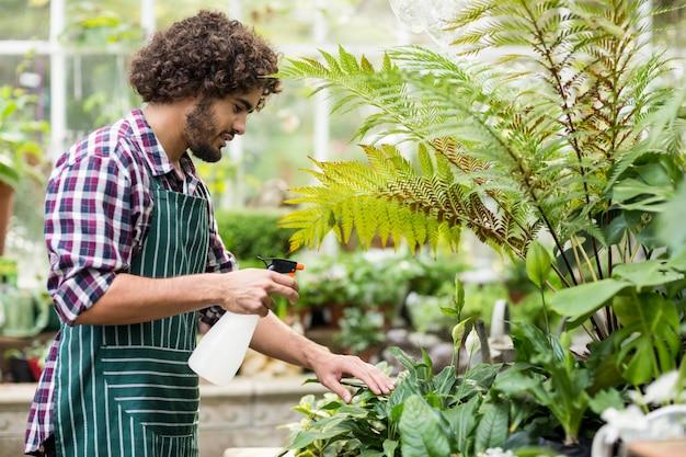 Мужской садовник, распыление воды на растения