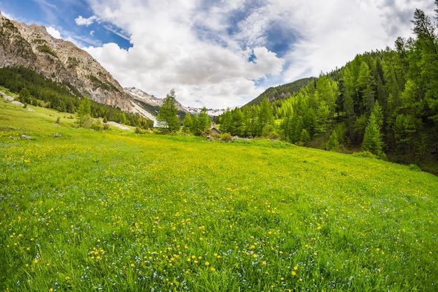 咲く高山草原と緑豊かな森林