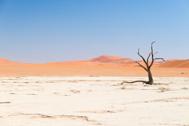 雄大な砂丘に囲まれたアカシアの木を編んだ風光明媚なソーサスフレイとデッドヴレイ、粘土とソルトパン