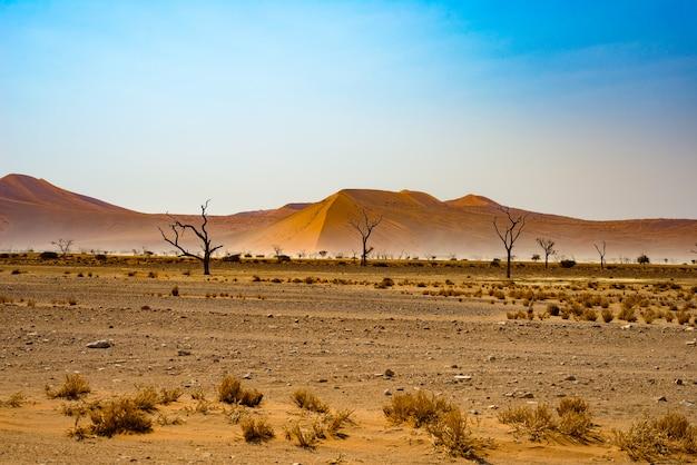 ナミブナウクルフト国立公園のナミブ砂漠
