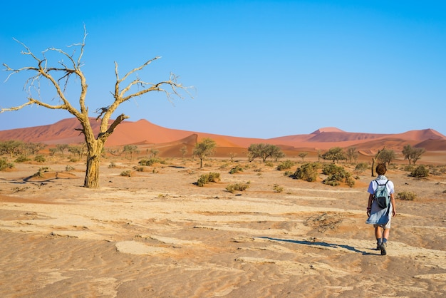 ソーサスフライ、雄大なナミブ砂漠を歩く観光客