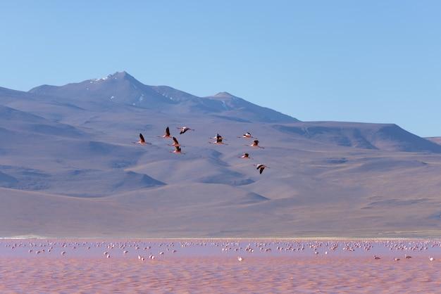 Группа в составе розовый фламинго летая над соленым озером, боливийскими андами