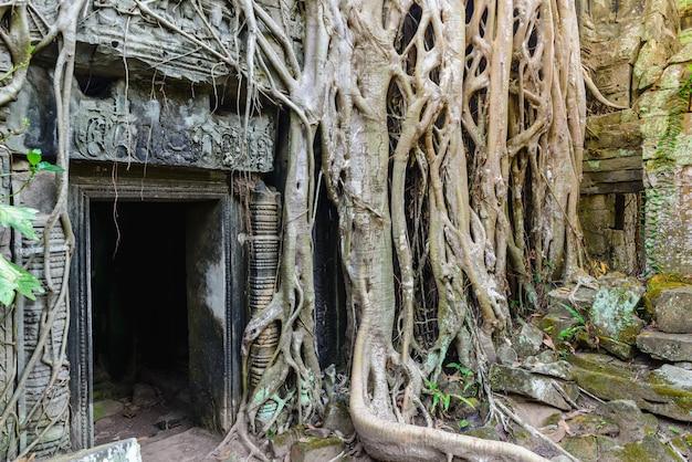 アンコール寺院を受け入れるタ・プロームの有名なジャングルの木の根