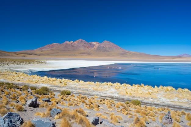 ボリビアのアンデスのフラミンゴと青い塩湖