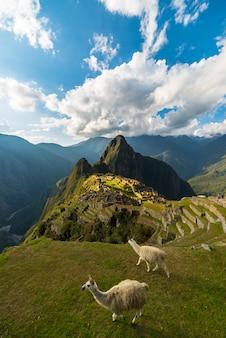 Солнечный свет на мачу-пикчу, перу, с ламами