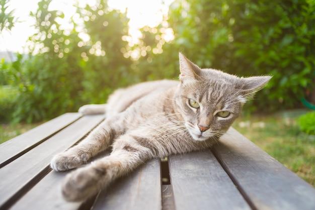 バックライトで木製のベンチに横たわっている猫