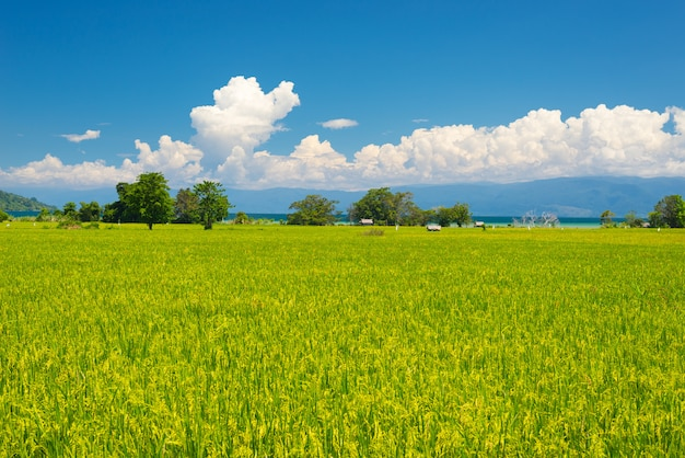 Идиллический азиатский пейзаж рисовых полей