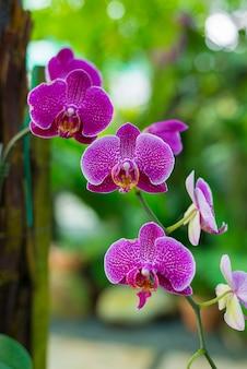 Малайзийский сад орхидей борнео