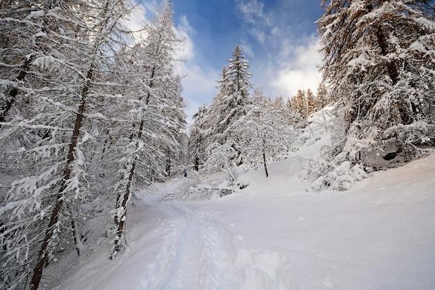 アルプスの冬、雪の中の木