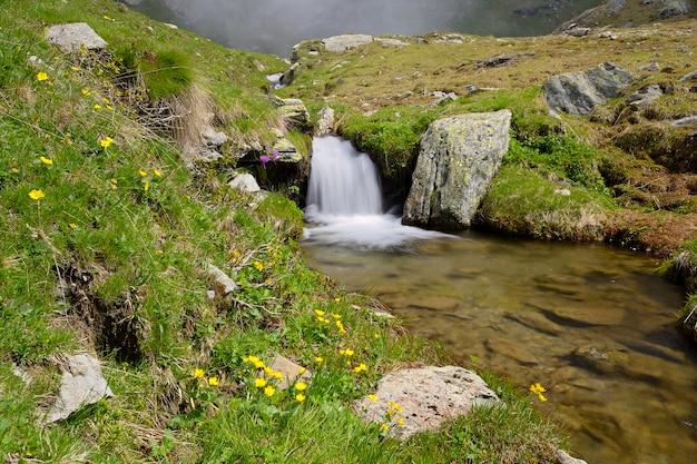アルプスの滝。岩、標高の高い花、緑豊かな牧草地の間を流れる小川
