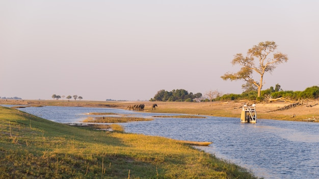 アフリカ、ナミビアボツワナ国境のチョベ川でのボートクルーズと野生動物サファリ。チョベ国立公園、有名なワイルドライフ保護区、高級旅行先。