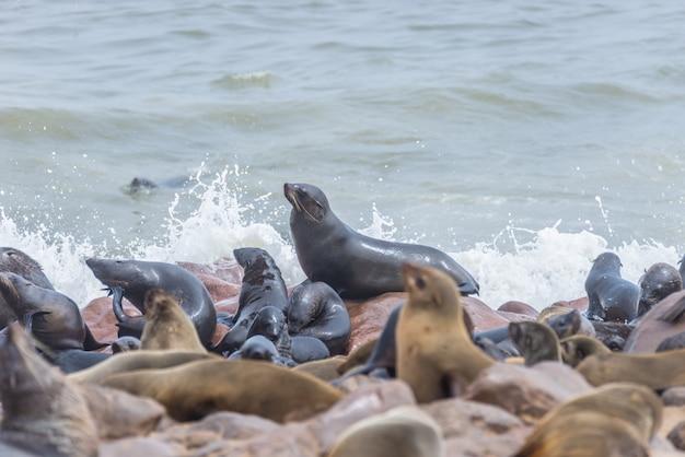 アフリカのナミビアの大西洋岸にあるケープクロスのアザラシのコロニー。海岸線と荒々しく手を振る海の眺め。