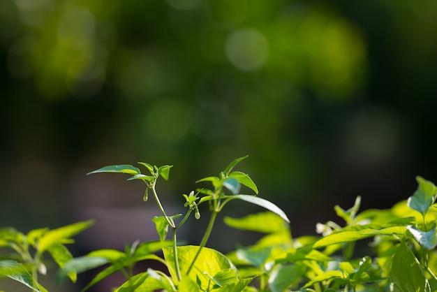 健康的な食事のための植物園と有機野菜の庭。有機農法による青々とした若葉に焦点を当てています。非常に浅い被写界深度。