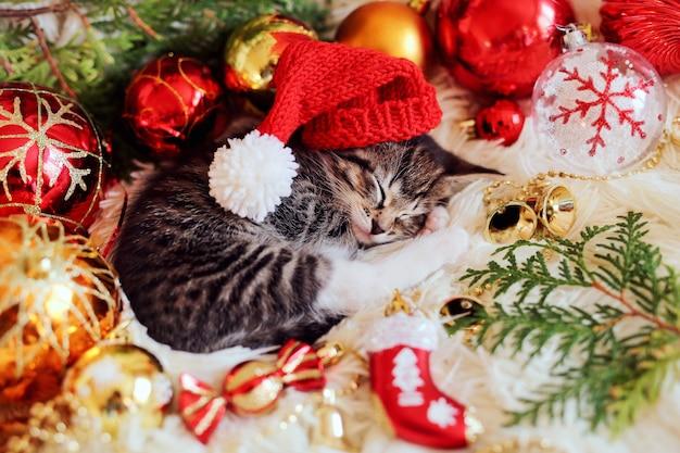 面白い子猫はクリスマスの明るい赤の装飾で眠る