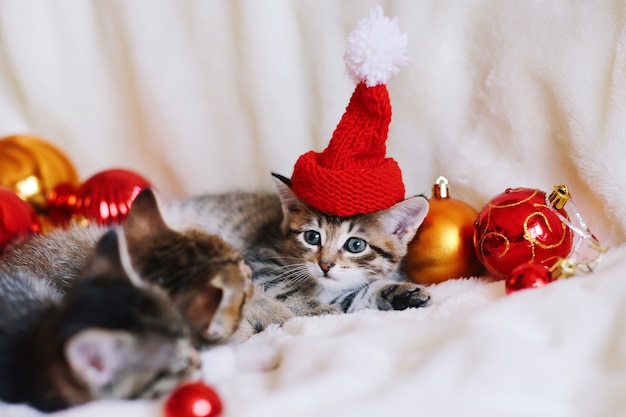 真っ赤なサンタ帽子で面白いクリスマス子猫。