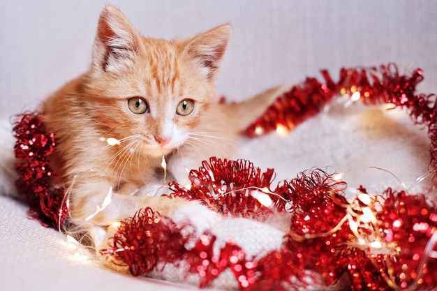 クリスマスの装飾で遊ぶ小さな赤い子猫