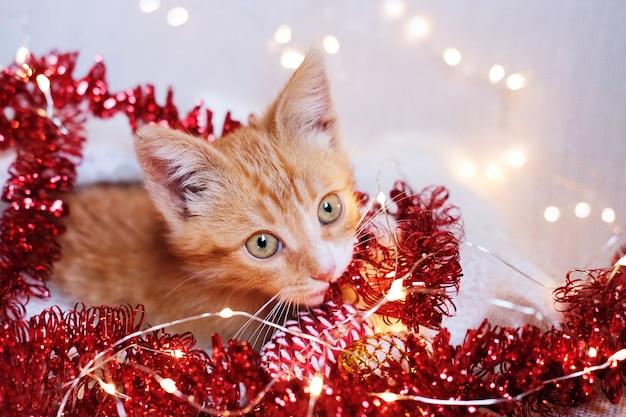 Маленький рыжий котенок играет в рождественские украшения