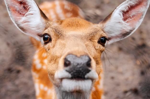森の中の若い鹿の肖像画