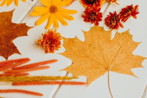 赤、オレンジ、黄色の秋の花。菊、ヘリクリサム、キクイモ。秋の乾燥したカエデの葉。