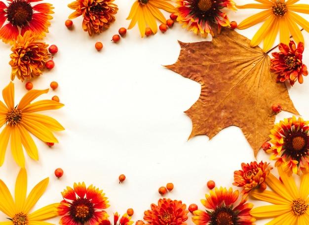 オレンジ、黄色、赤の秋の花とナナカマドの果実、白い背景にカエデの葉のフレーム