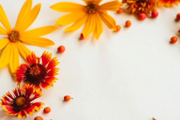 オレンジ、黄色、赤の秋の花と白い背景のナナカマドの果実のフレーム