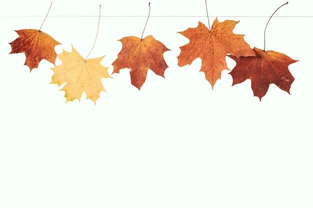 乾燥したカエデの葉がロープに掛かる