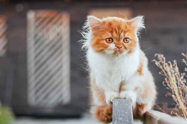 Пушистый рыжий котенок на прогулке.