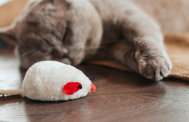 眠っている灰色の猫とおもちゃの白いマウス。シロネズミ。猫のおもちゃ。