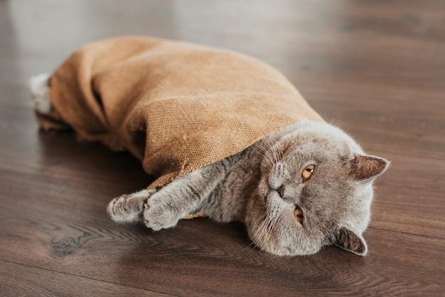 灰色の生意気な猫が床に横たわり、黄麻布に包まれています。猫は袋に入っています