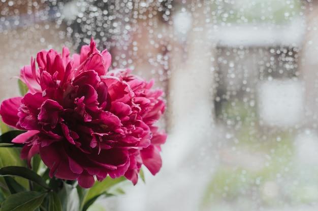 雨の日の窓辺にピンクの牡丹。濡れたガラスの牡丹