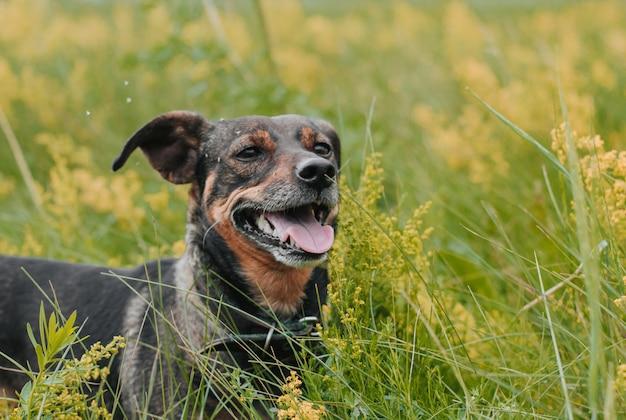 Маленькая собака в цветущем поле. полевые цветы. черный собака