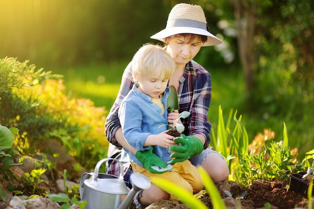 美しい女性と彼女のかわいい息子の夏の日に国内庭園のベッドで苗を植えること