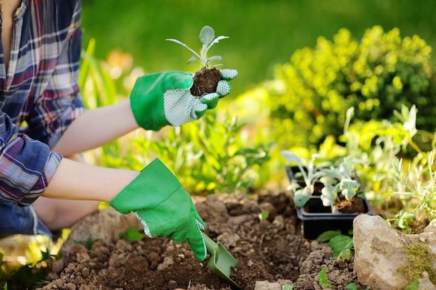 夏の晴れた日に庭のベッドで苗を植える女