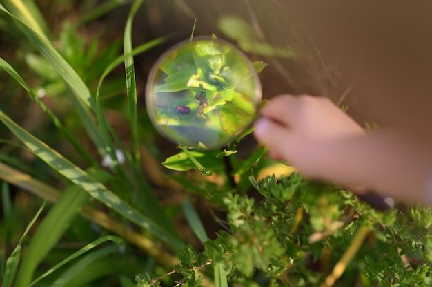 虫眼鏡で自然を探索する子供。虫眼鏡で虫を見て少年。閉じる。
