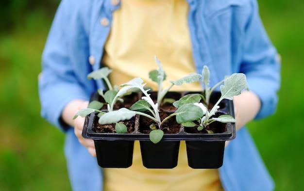 国内の庭の鍋で苗を保持している小さな男の子