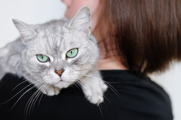 Женщина, держащая красивого серого кота
