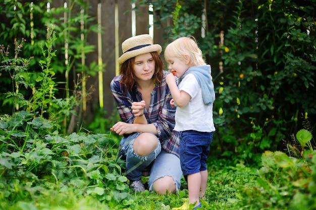 若い女性と庭で果実を拾うかわいい幼児男の子。夏の収穫を楽しんでいる家族。
