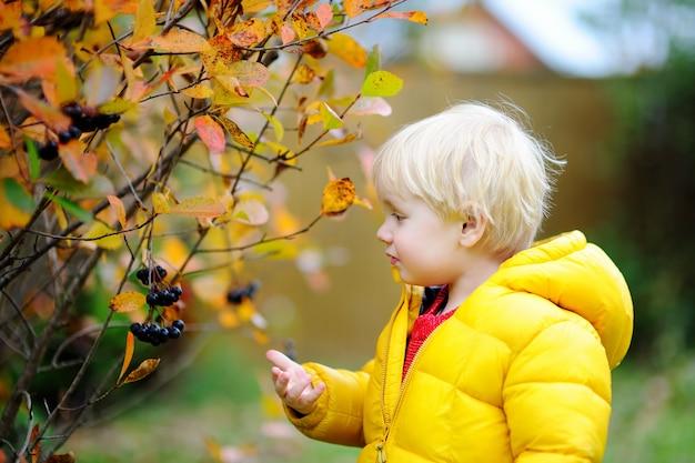 国内の庭で黒スグリを選ぶかわいいスタイリッシュな幼児男の子