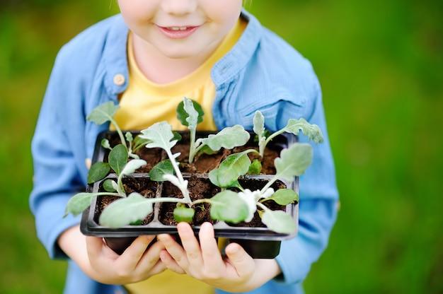 夏の晴れた日に家庭菜園にプラスチック製の鍋で苗を保持している小さな男の子