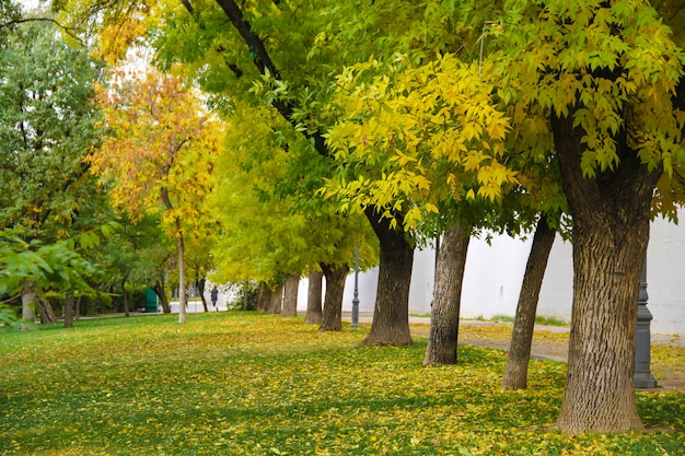 静かな公園で黄色と緑の木々。秋のコンセプトです。
