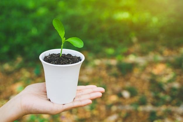 鍋に植物を持っている手。
