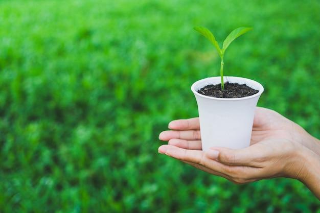世界環境デーのコンセプト。鍋に植物を持っている手。
