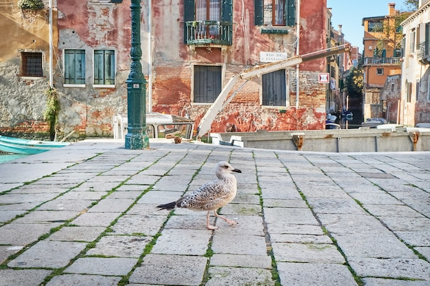 Чайка в венеции, возле канала