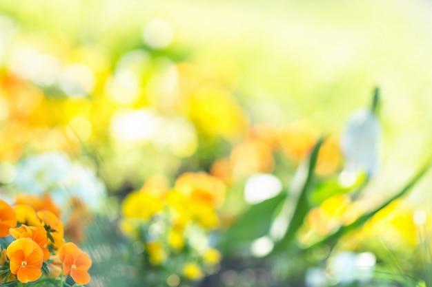 Затуманенное весенние цветы фон.