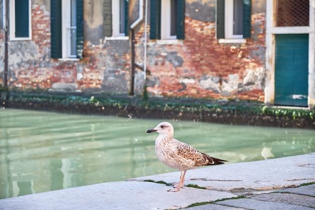 Чайка в венеции, италия. солнечный день, канал и исторические здания на заднем плане.