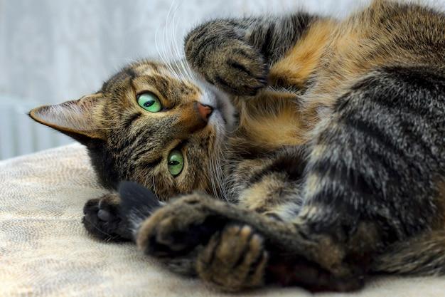 カメラを見つめて緑色の目で黒灰色の猫
