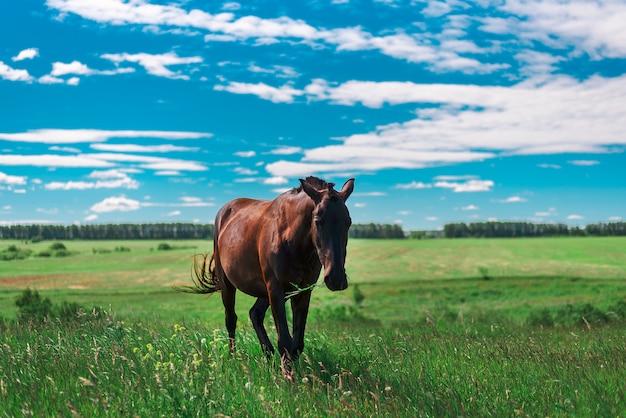 茶色の妊娠馬は緑の牧草地に新鮮な草をかむ