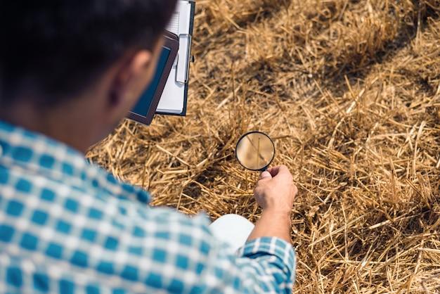 Крупный план человека сзади с увеличительным стеклом, глядя на сено с табличкой, фермер-агроном-ботаник изучает урожай