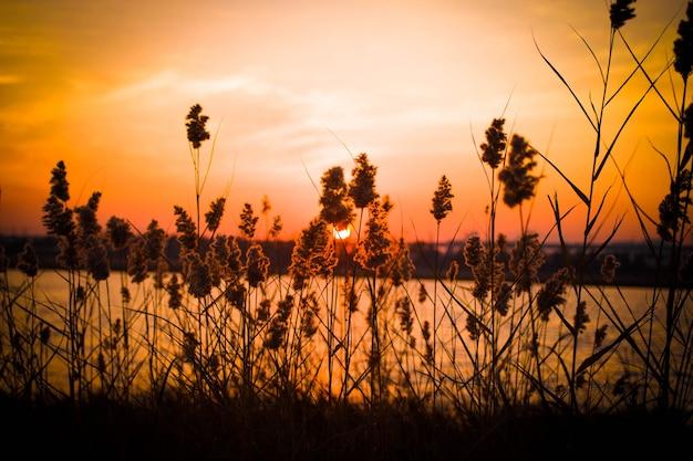 湖の風景日没